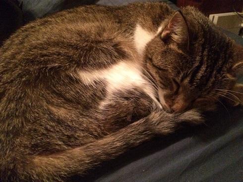 IsabelleSleeping